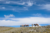 horse on the sky background in the mountains of Mongolia