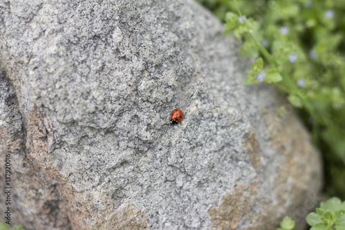Uğur Böceği Poster