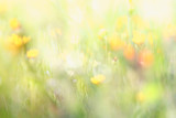 abstract dreamy photo of spring wildflowers