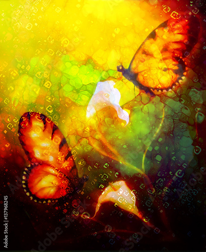 flying butterfly on decorative background with cala flower, graphic design.