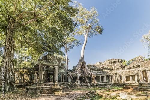 Rovine del tempio di Angkor Wat Poster