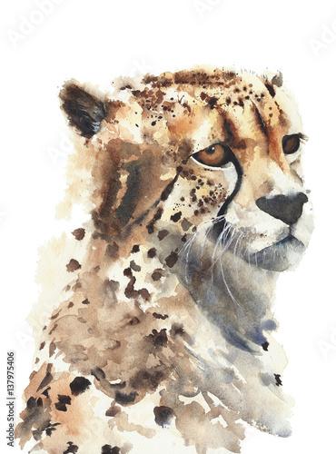 geparda-duzego-kota-akwareli-obraz-odizolowywajacy-na-bielu