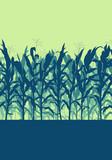 Corn field evening or morning light landscape vector