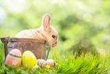 Fototapety Kaninchen Baby Osterkarte