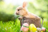 Fototapety Kaninchen Baby Osterhase Karte Frühling Natur