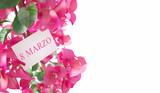 Fiori o pianta per la festa della donna