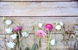 Leinwanddruck Bild - Frühlingsblumen - Blumengrüße - Ranunkeln, Gerbera