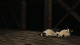 Black and white bored furry cat lying on wooden porch, girl in white nightie and knitted shawl run away in dark night