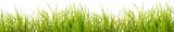 brins d'herbe, fond blanc