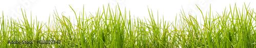 Foto op Plexiglas Gras brins d'herbe, fond blanc