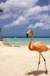 Постер, плакат: Flamingo Beach Aruba