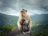 Monkeys at the Gorges viewpoint. Mauritius.