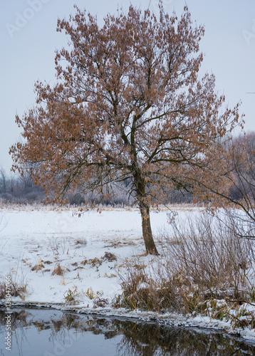 Papiers peints Cappuccino Winter landscapes