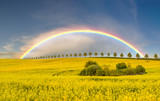 rainbow over the cultivated field