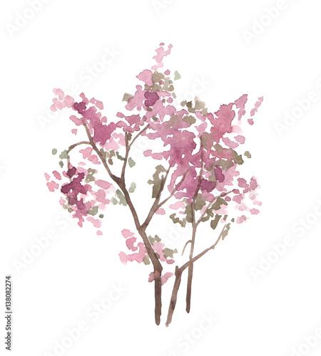 akwarela-rozowy-drzewo-na-bialym-tle-blossom-bush