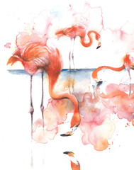 Flamingo on the lake eating pink bird bird of Africa watercolor illustration isolated on white background