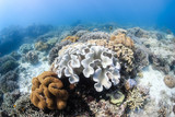 Soft corals in shallow water