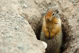 Hörnchen im Erdloch