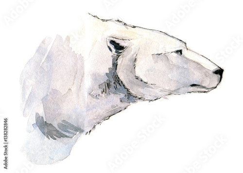 Polar bear head side view watercolor illustration isolated on white background. - 138282846