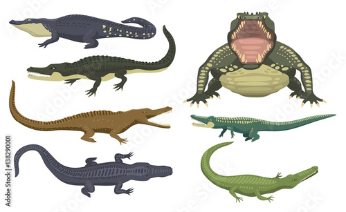 Foto op Plexiglas Krokodil Cartoon green crocodile danger predator and australian wildlife river reptile carnivore alligator with scales teeth flat vector illustration.