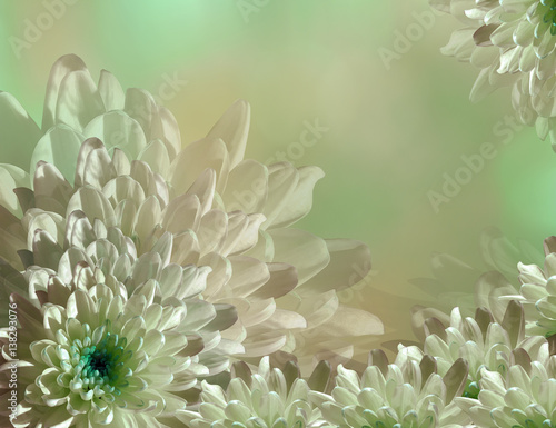 Naklejka flower on blurry turquoise-green-pink background halftone. Blue-white flowers chrysanthemum. floral collage. Flower composition. Nature.