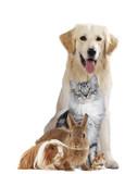 Haustiergruppe mit Hund, Katze und Nager freigestellt auf weiß - 138294849