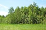 Summer forest landscape