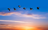 Spring or autumn migration of birds - 138306461