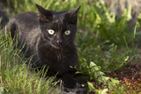 Schwarze Katze im Garten