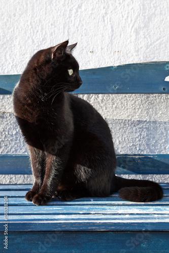 Foto op Plexiglas Panter Katze auf Bank