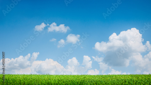 Foto op Canvas Natuur blue sky and summer green field