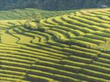 Rice field terraces on mountain.
