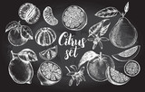 nk hand drawn set of different kinds of citrus fruits. Food elements collection for design, Vector illustration. - 138346430