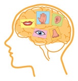 Fototapety Senses illustration. Sight, hearing, taste, smell and touch in human brain.