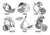 Ink hand drawn set of different kinds of citrus fruits - tangelo, orange, lemon, tangerine, pomelo, bergamot. Food elements collection for design, Vector illustration. - 138350610