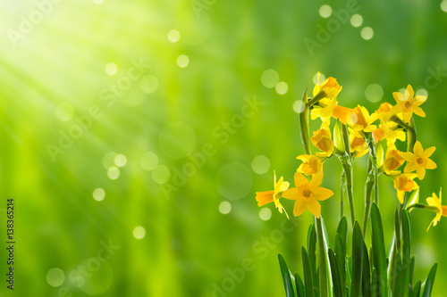 Wiosenne słońce świeci na wielkanocnych dzwoneczkach