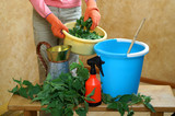 Preparing an nettle extract for plants in the garden - 138373607