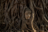 Buddha face in the tree