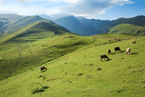 Cows grazing on a green slope of mountains - 138578621