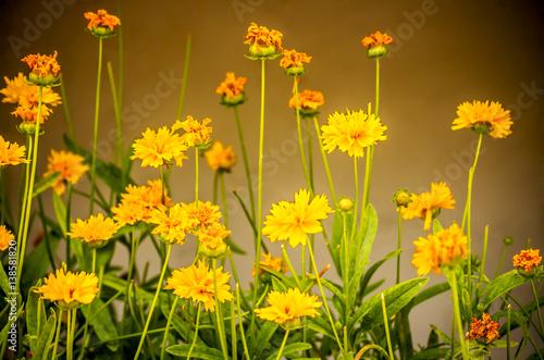 Mediterranean flowers