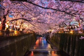 Cherry blossom lined Meguro Canal in Tokyo, Japan. Travel in japan concept.