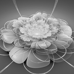Space flower. Deformation time. Black and white. 3D surreal illustration. Sacred geometry. Mysterious psychedelic relaxation pattern. Fractal abstract texture. Digital artwork graphic astrology magic