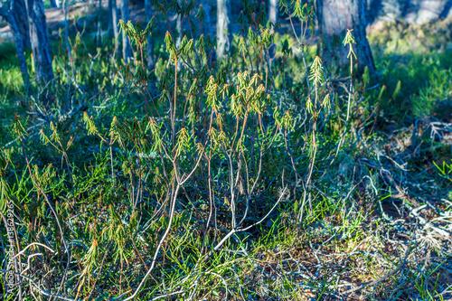 Stockholm Skvattram är grön på vintern som på denna vinterbild 1/2