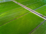 Aerial view of green paddy fields.