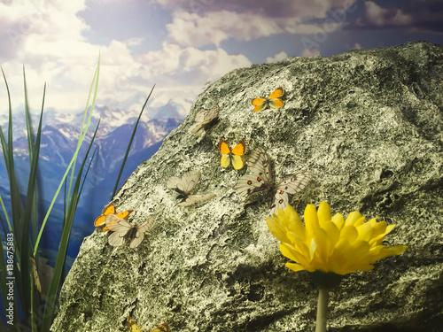 Poster Kelebeklerin yaşam alanı