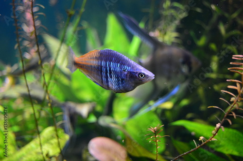 Little tropical fish Poster