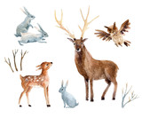 Watercolor deer with fawn, rabbits, birds isolated on white background. - 138709467