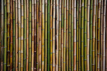 Bamboo fence background texture