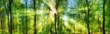 Frisch grüner Wald, verzaubert von Sonnenstrahlen, Landschaft Panorama