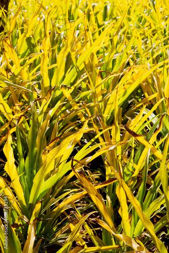 ein fild von Gras colse herauf Hintergrundzusammenfassung